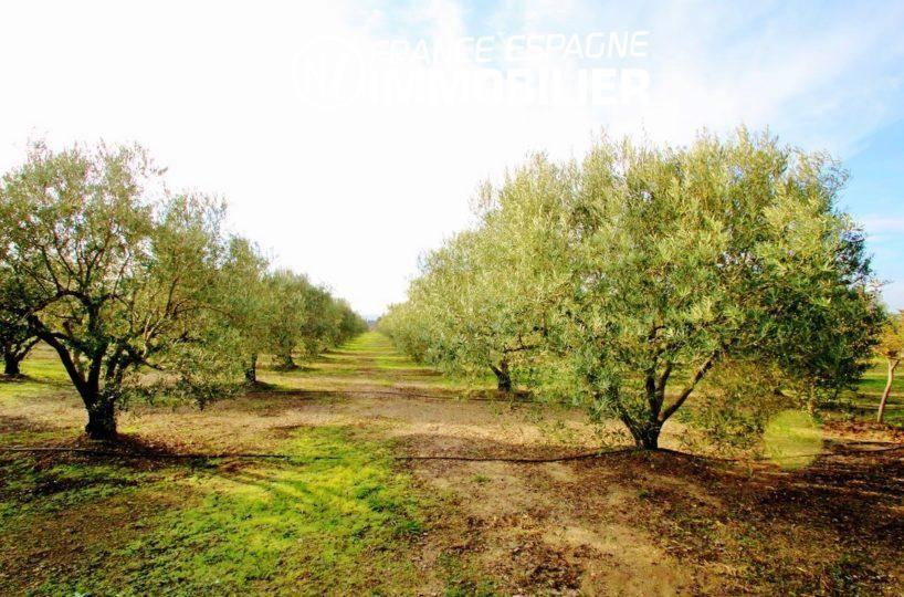achat maison costa brava, ref.2772, exploitation agricole avec 350 oliviers