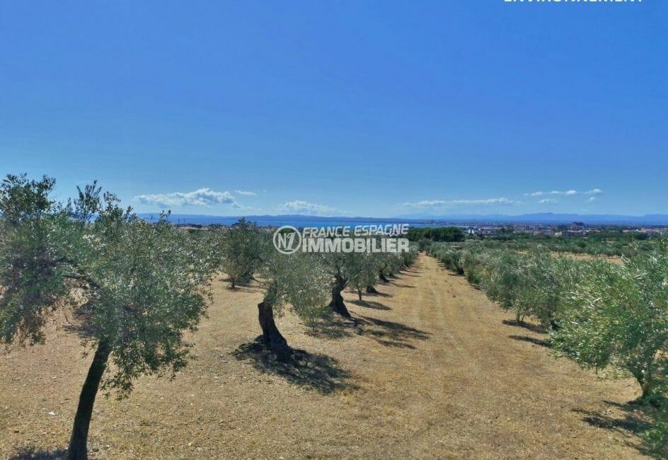 vue sur les vignes et la côte aux environs