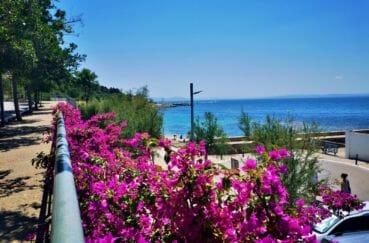 route qui donne accès à la plage aux environs