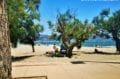 la plage de roses avec son sable fin, ses eaux transparentes et sa vue sur les montagnes