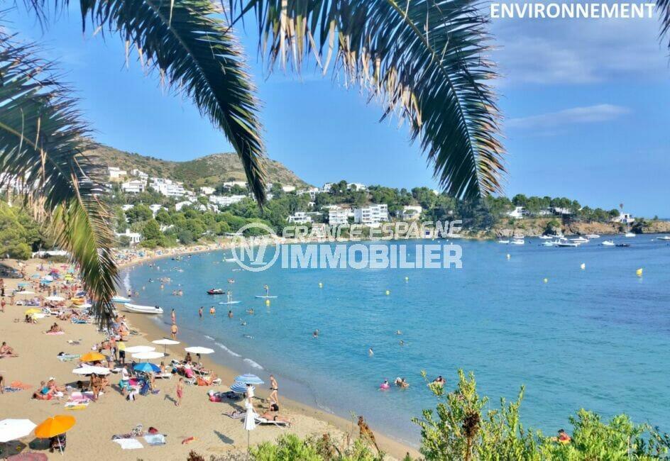 jolie plage ensoleillée arborée de roses, eaux turquoises et sable fin