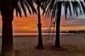 coucher de soleil sur les palmiers de la plage de rosas