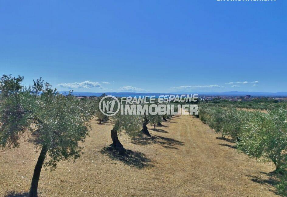 magnifique paysage, champs d'oliviers, au loin la mer et les montagnes
