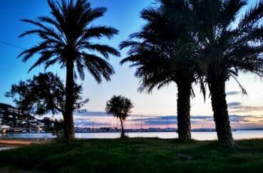 longues soirées estivalles sur la plage de rosas sous les palmiers
