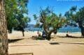 la plage ensoleillée de roses avec son sable fin et ses eaux calmes et transparentes