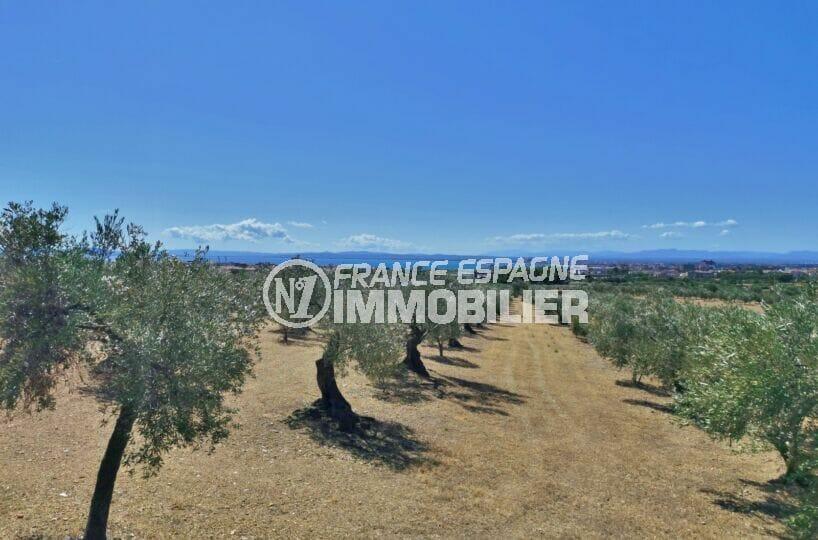 empuriabrava et ses nombreux champs d'oliviers
